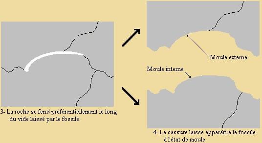 moule-c1.jpg