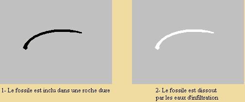 moule-d1.jpg